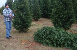 Choose and Cut Christmas Tree Farms